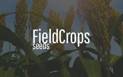 -Field Crops Seeds-