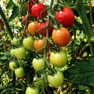 Various Determinate and Intdeterminate Varieties